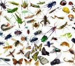 你知道Bug也有分类的吗?插图