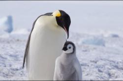 Linux下安装配置Cntlm代理插图